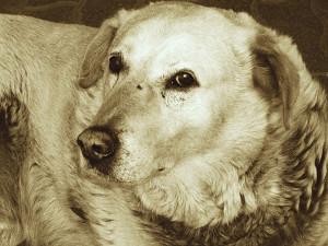 Собака. Фото В. Гурболикова
