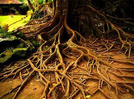 Наши корни