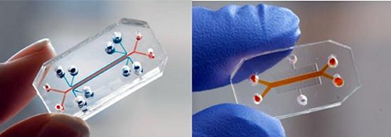 Лёгкое-на-чипе и клетки кишечника-на-чипе