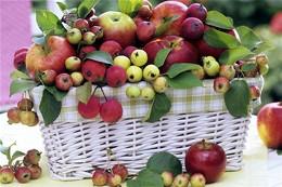 Можно ли вкушать яблоки до Преображения?