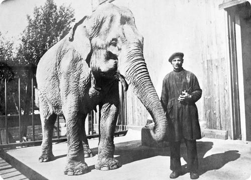 В.К. Буряк и слониха Бэтти. 1932 год.