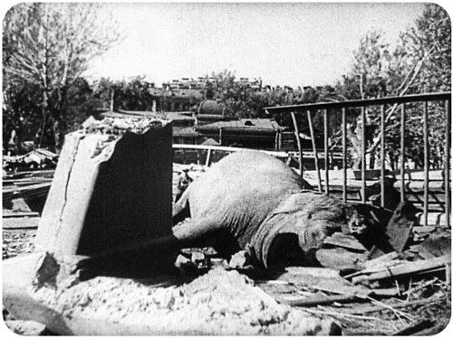 Погибшая Бетти. 10 сентября 1941 года.