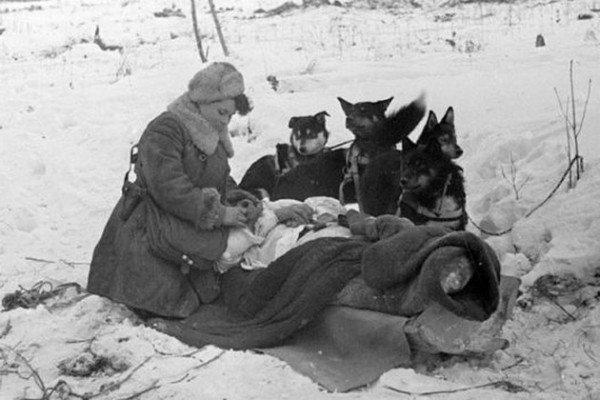 Собаки — помощники санитаров