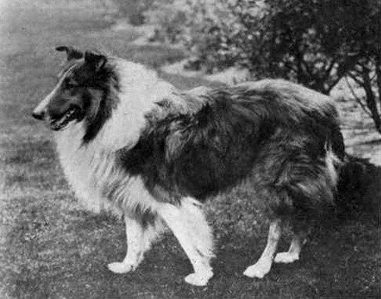 Легендарный пёс-сапёр Дик