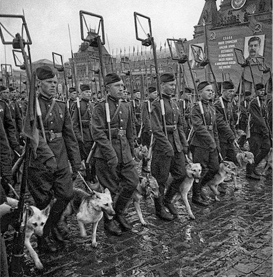 Сводный батальон, Парад Победы
