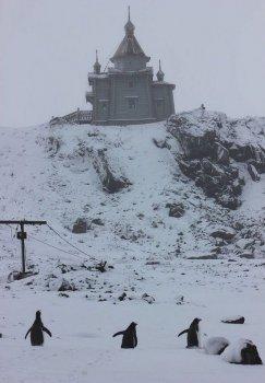 И пингвины тянутся к храму