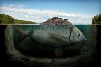 Рыба ищет, где глубже...